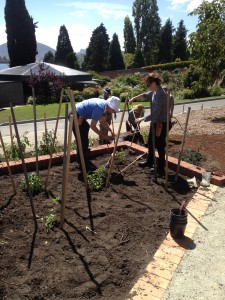 Certificate 2 Students planting out Tomatillos in the Tasmanian Community Food Garden