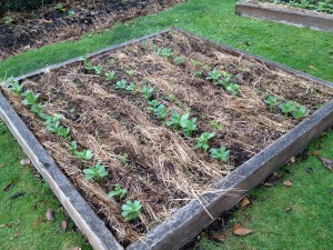 Six weeks on and the beds are looking good!