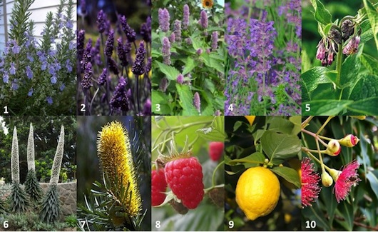 There are a huge number of plants that you can plant in your Tasmanian garden to attract bees